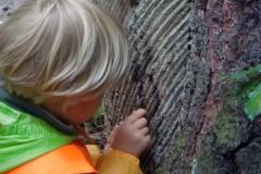waldkindergarten-dresden-harz