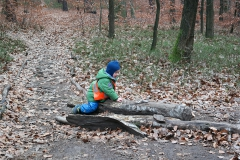 waldkindergarten-dresden-waldkind
