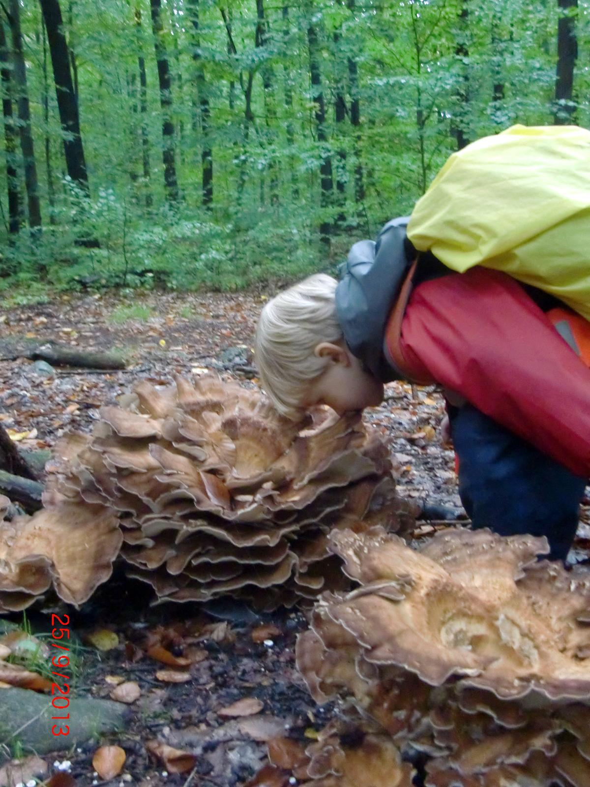 waldkindergarten-dresden-pilze